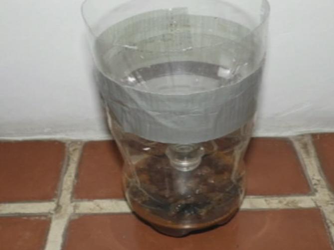 Treba vam samo flaša i još TRI SASTOJKA: Zamka za komarce će vas SPASITI ovog leta