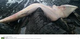 Fale wyrzuciły na brzeg gigantycznego potwora