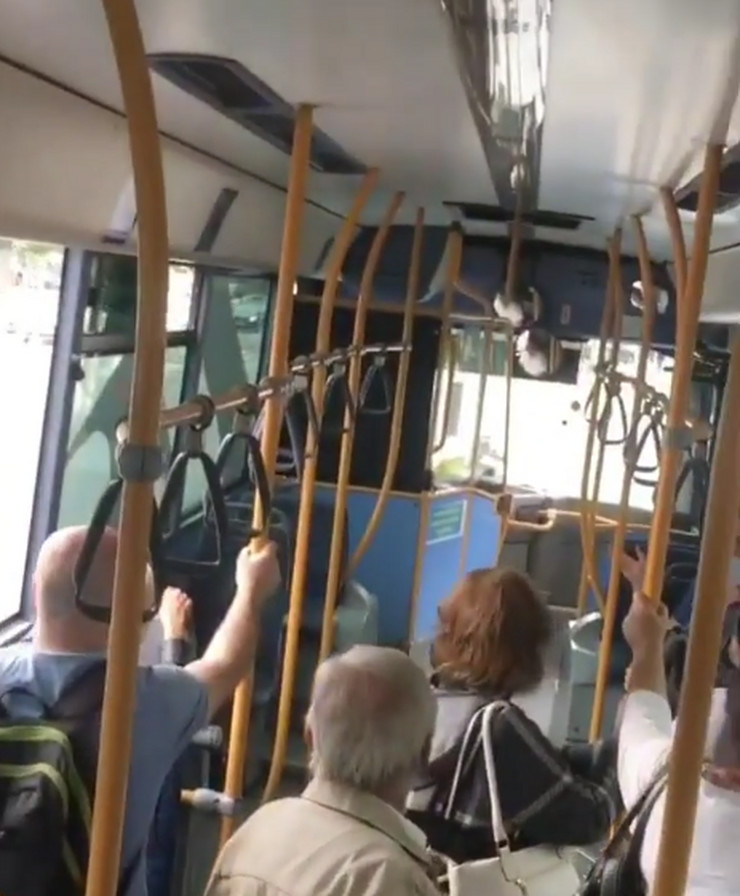 Autobus Novi Sad razbio staklo