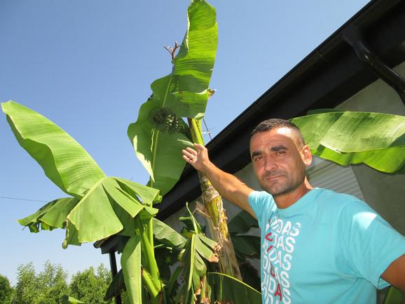 PONOSAN  Slaviša Vučetić pored banane u Lozničkom Polju