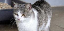 Kto przygarnie kotkę Lawendę?