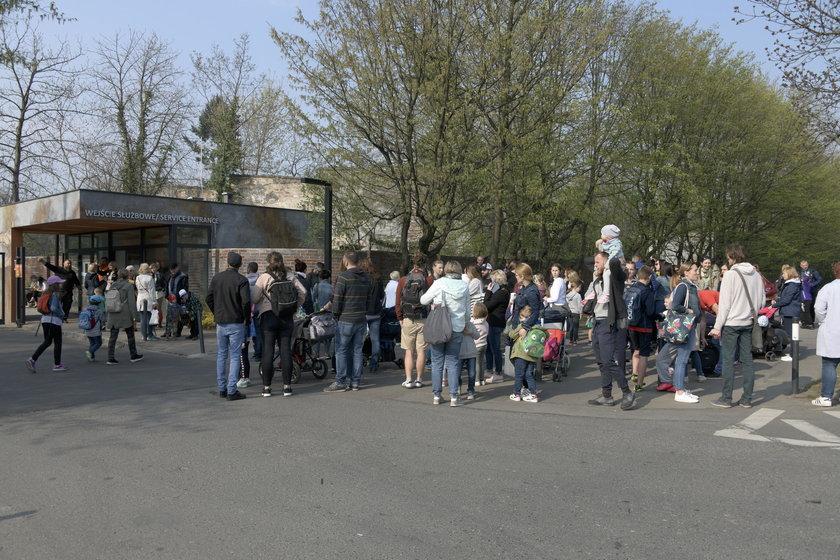 We Wrocławiu strajkuje 177 szkół i przedszkoli