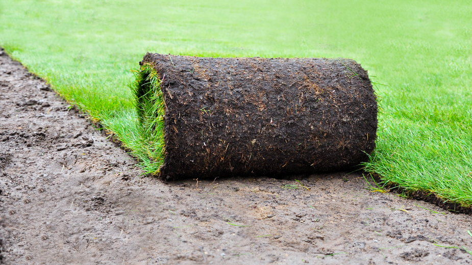Trawa z rolki pozwala na szybki założenie trawnika - Marco2811/stock.adobe.com