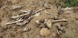 Ludzkie cmentarzysko odkryte w...