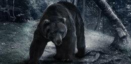 Atak w Bieszczadach: Niedźwiedź przegryzł mężczyźnie dłoń