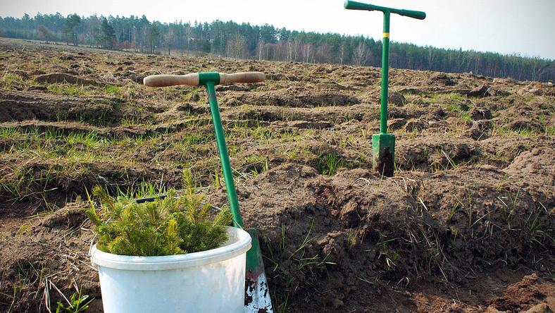 Leśnicy zaczęli sadzenie lasu