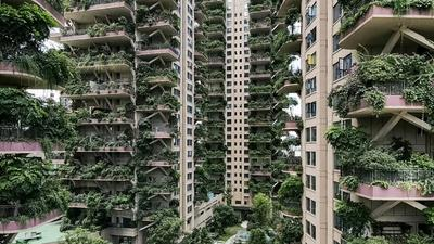 Welcome to the jungle: plants overrun Chinese apartment blocks