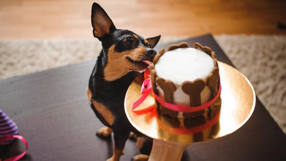 Tort dla psa może być przygotowany z ulubionych przekąsek czworonoga - fesenko/stock.adobe.com