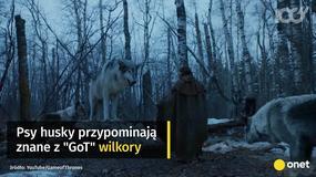 """Gwiazda """"Gry o Tron"""" apeluje do fanów, by przestali kupować husky"""