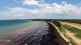 Karaiby walczą z glonami; grubość śmierdzącej warstwy sięga 3 metrów