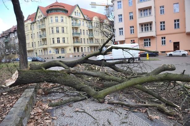 Usuwanie skutków wichury, która przeszła przez woj. zachodniopomorskie. Fot. PAP/Marcin Bielecki