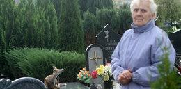 Groza w Koszalinie. Lisy opanowały cmentarz
