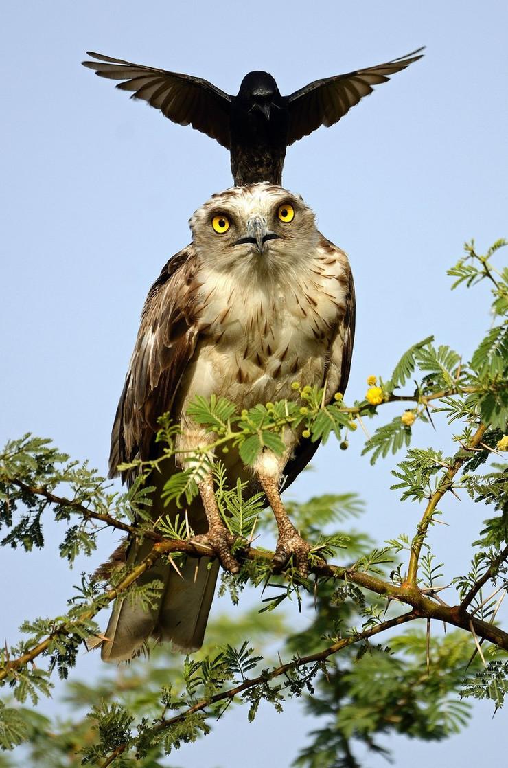 vrana profimedia-0315654950