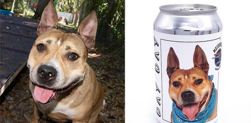 Jej pies zniknął 3 lata temu. Jego los odmieniła... puszka z piwem!