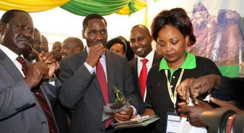 Meru Governor Peter Munya (right) and NASA leader Raila Odinga chew Miraa (khat) during an Annual Devolution Conference in Meru on April 22, 2016.