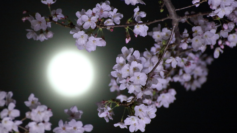 What The Full Flower Moon Means For Your Sign