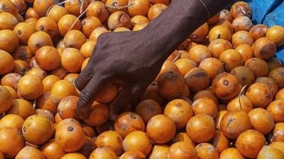 5 interesting health benefits of Agbalumo (African star apple)