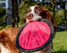 5 lat temu pracownicy UPS założyli facebookową grupę UPS Dogs, na której dzielą się zdjęciami uroczych zwierzaków