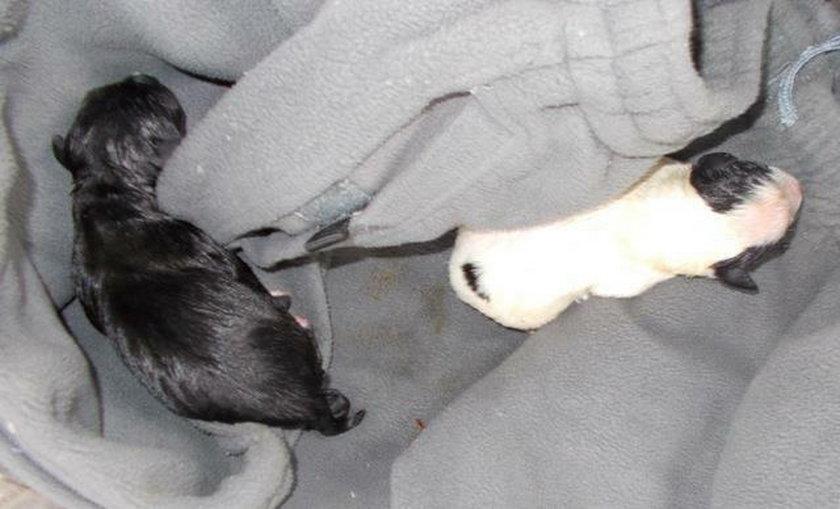 Uratowane szczeniaki