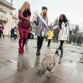 Miss Supranational 2015: najpiękniejsze kobiety świata bawią się w Polsce