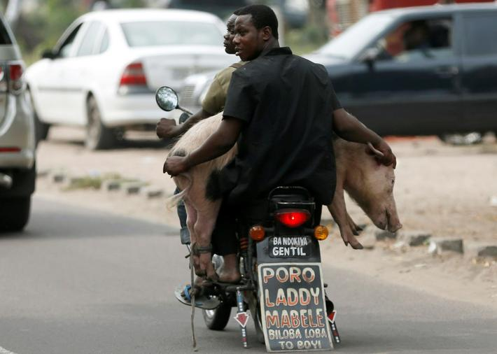 Men transport a pig with a motorbike in Kinshasa