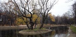 Miasto dba o parki miejskie