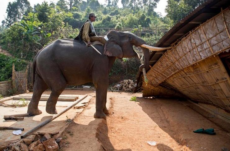 Indija slonovi AP1