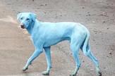plavi psi