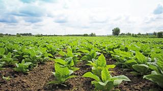 Sejm znowelizował ustawę o podatku rolnym