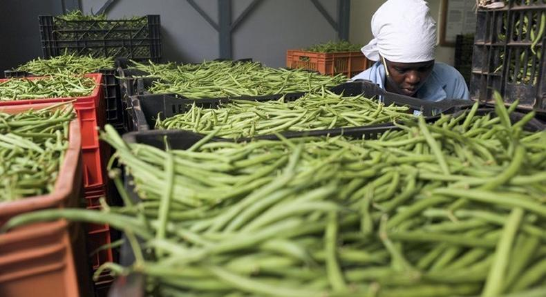 Horticulture earned Kenya $1.15 billion last year to become the country's third top foreign exchange earner