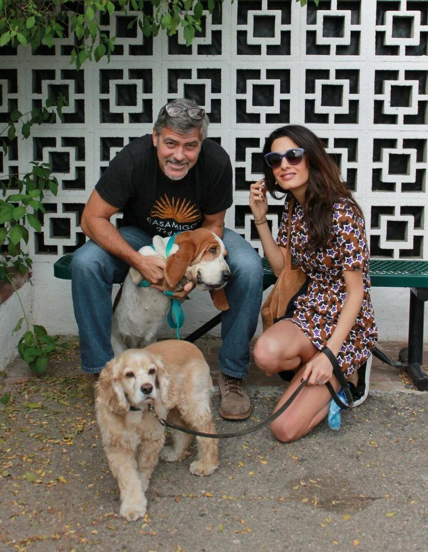 George Clooney z żoną Amal i psami