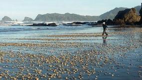 Katastrofa ekologiczna w Chile. Czerwony przypływ zabił miliony skorupiaków
