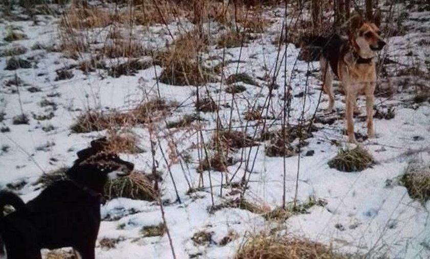 9-latek pogryziony przez psy w Gdańsku. Matka prosi o pomoc