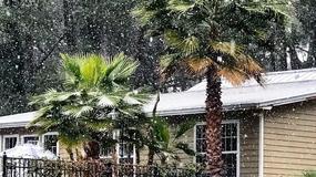 Na Florydzie pierwszy raz od niemal 30 lat spadł śnieg