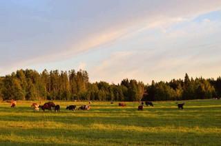 Nowoczesne rolnictwo, spółdzielcze wartości