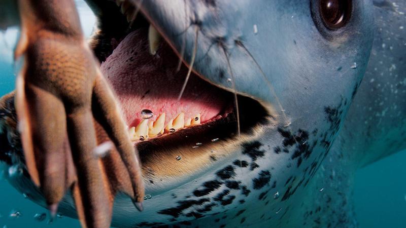 2006 | Antarktyda