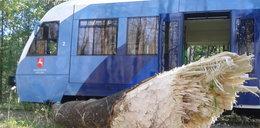 Katastrofa w Lubelskiem! Bobry wykoleiły pociąg!