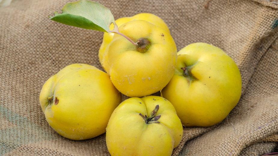 Owoce pigwy - Guntar Feldmann/stock.adobe.com