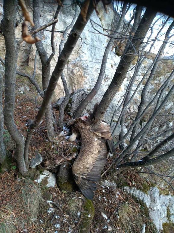Dobrila pronađena iznad gnezda gde se izlegla