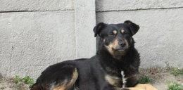 Komu przeszkadzał pies z Truskawkowej?