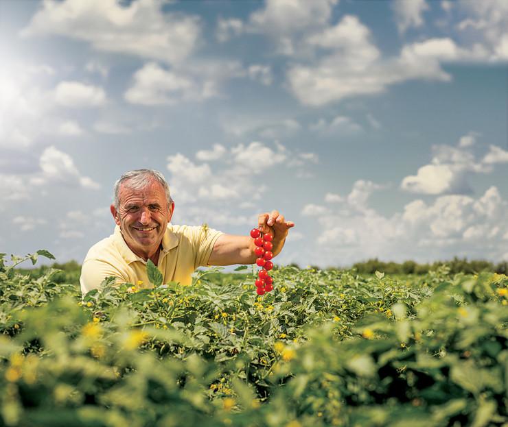 Slika 2 Čeri paradajz - Boško Rajković
