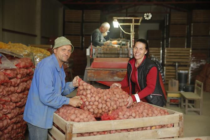 Na starom drejeru svaki krompir po veličini pronađe put do džaka