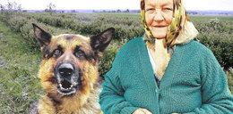 Wilczur uratował babcię!