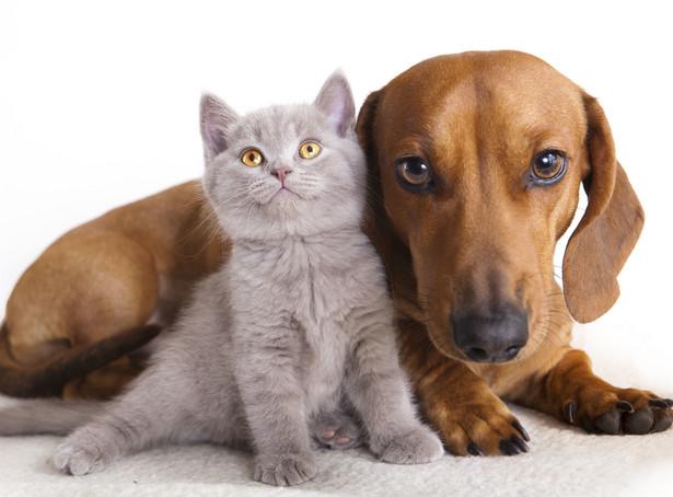 Lewica chce aby powołano rzecznika praw zwierząt