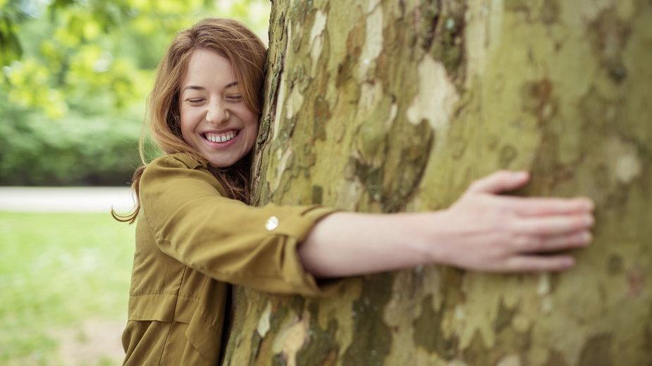 Przytulanie drzew