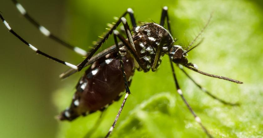 Dotychczasowe testy nie wykazują, by ultradźwięki odstraszały komary