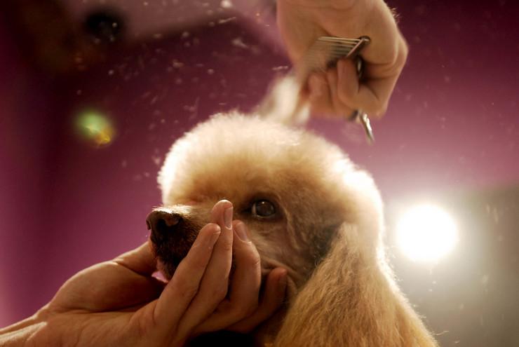 frizer za pse, pas