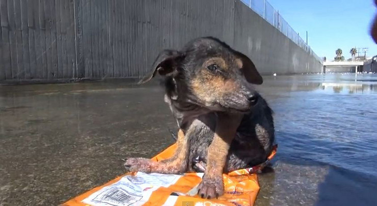 591296_pas-02-foto-youtube-hope-for-paws--official-rescue-channel