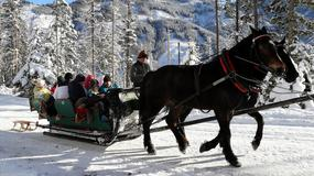 Koń przewrócił się na drodze do Morskiego Oka