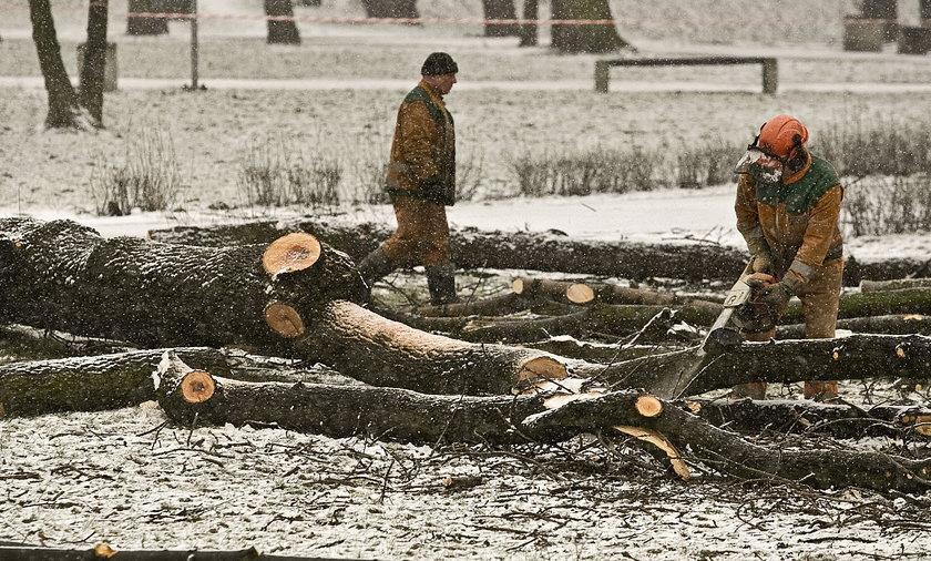 Wycinka drzew w Dąbrowie Górniczej